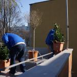 Výsadba kvetín na strechu kontajnerového stojiska