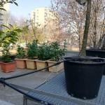 kvetinac_nove-kvety-2