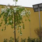 Jabloň na streche kontajnerového stojiska