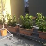 Celoročne zelené vavrínovníky na streche kontajnerového stojiska